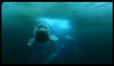 Las belugas
