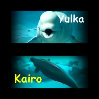 Ayudemos a Yulka y a Kairo