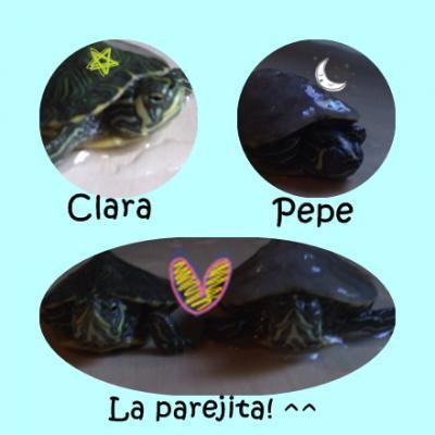 Pepe y Clara mis dos tortugas